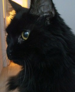 Remy, my 17-year-old cat, has been with me for more than half my life as I got her in 1996 after a friend's cat had kittens.